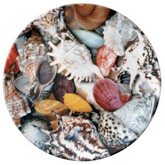 Colorful Seashells Plate
