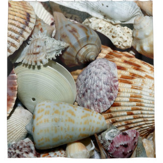 Colorful Seashells up Close Shower Curtain