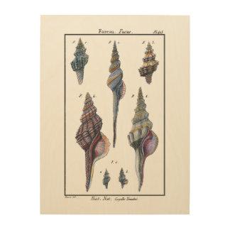Colorful Seven Seashells Wood Print