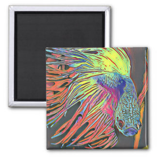Colorful Siamese Fighter Fish Square Magnet