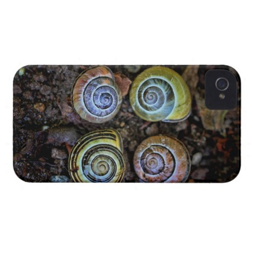 Colorful Snail Shells Picture Blackberry Bold Case
