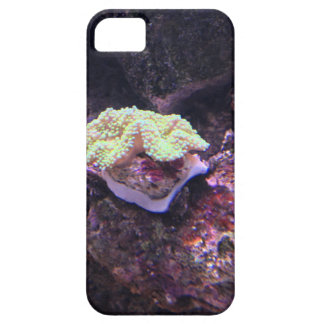 Colorful Soft Coral And Live Rocks iPhone 5 Case