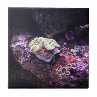 Colorful Soft Coral And Live Rocks Tile