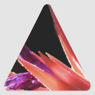Colorful Spiked Plant Triangle Sticker