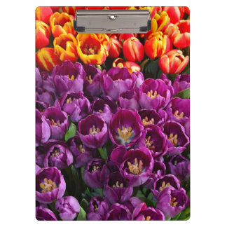 Colorful spring tulips clipboard