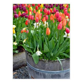 Colorful spring tulips planter print postcard