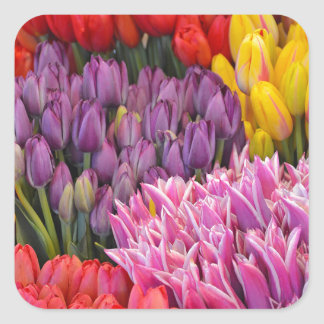 Colorful spring tulips sticker