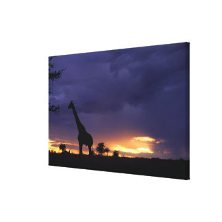 Colorful sunset late afternoon image of safari canvas print