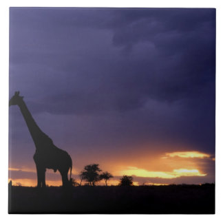 Colorful sunset late afternoon image of safari ceramic tiles