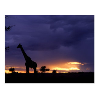 Colorful sunset late afternoon image of safari postcard