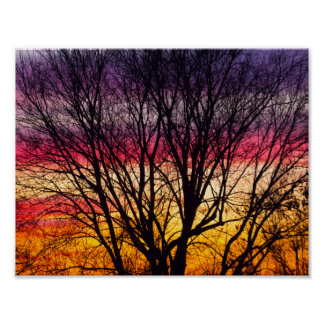 Colorful Sunset with a silhouetted tree, Ohio Poster