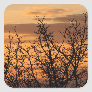 Colorful Sunset with tree silhouette Square Sticker