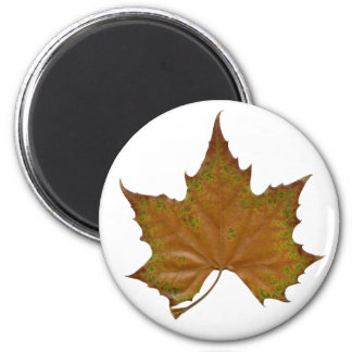 colorful sycamore leaf magnet