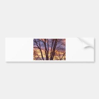 Colorful Tree Branches Night Bumper Sticker