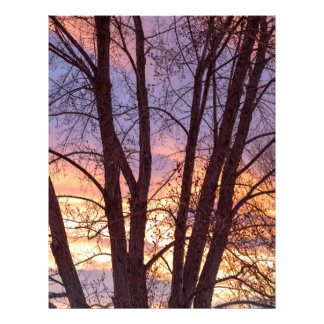 Colorful Tree Branches Night Letterhead