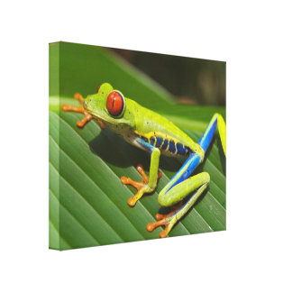 Colorful Tree Frog Canvas Print