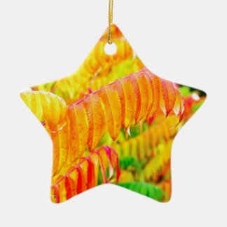 Colorful tree leaves in autumn season outdoors ceramic star ornament