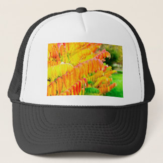 Colorful tree leaves in autumn season outdoors trucker hat