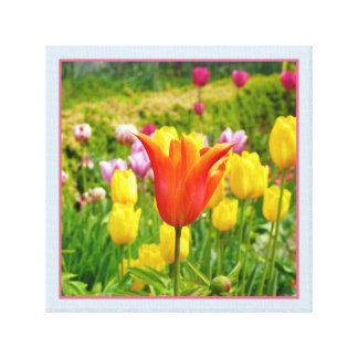 Colorful Tulips_321_B_R2 Canvas Print