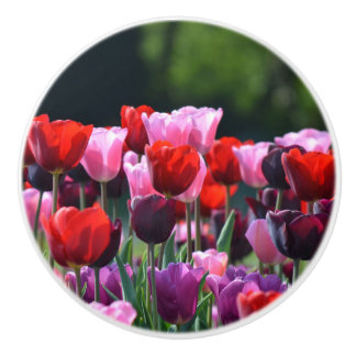 Colorful Tulips Dresser Knob