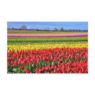 Colorful tulips landscape canvas print