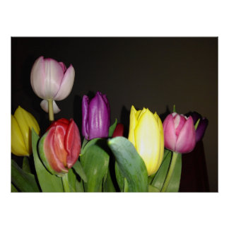 Colorful Tulips Still Life Poster