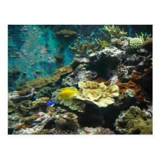 Colorful Undersea World/Coral Reef Marine Life l Postcard
