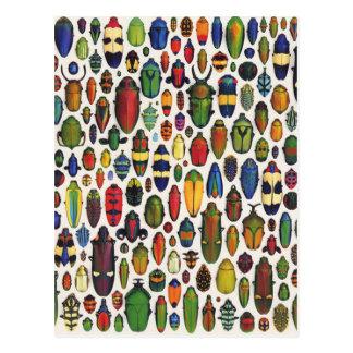 Colorful Vintage Illustrated Beetles Postcard