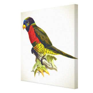 Colorful vintage parrot illustration canvas print