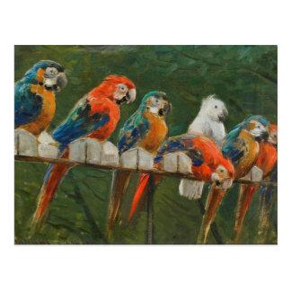 Colorful Vintage Parrots Postcard