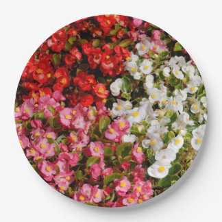 Colorful Wax Begonias Paper Plate