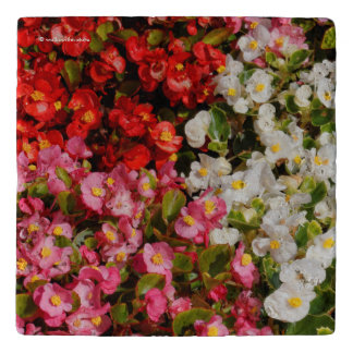 Colorful Wax Begonias Trivet