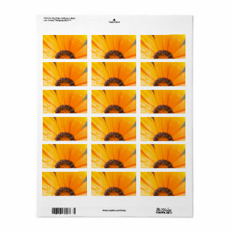 Colorful Wet Daisy Half Close-Up Photograph Label