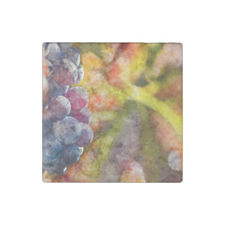 Colorful Wine Grapes on the Vine Stone Magnets
