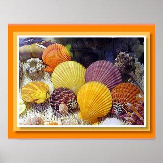 Colorful Worldwide Seashells Canvas Print