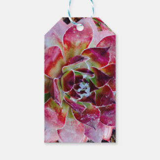 Colors and forms of nature gift tags