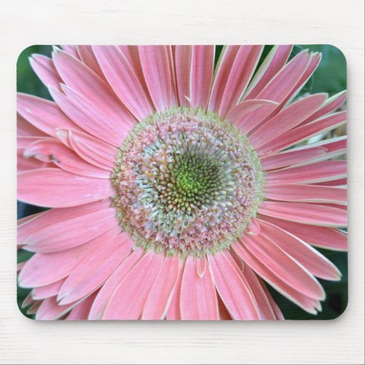 Colors of a Gerbera Daisy Mouse Pads