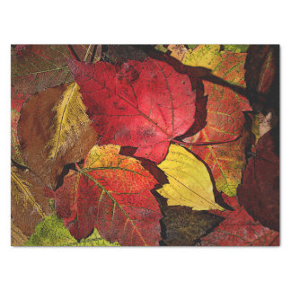 Colors of Fall Tissue Paper