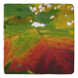 Colors of the Maple Leaf Trivet