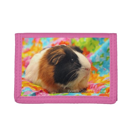 Colour Burst Guinea Pig Wallet