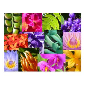 Colour Me Happy Postcard
