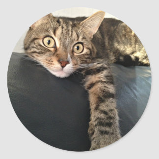 Colour Photo Of Cat Relaxing Classic Round Sticker