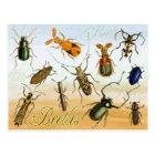 Colourful Beetles Postcard