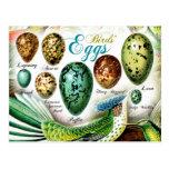 Colourful Birds' Eggs
