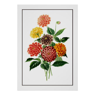 Colourful Botanical Flowers Illustration Poster