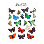 Colourful Butterfly Collection Postcard