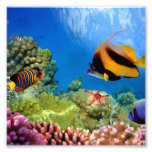 Colourful Coral & Tropical Fish