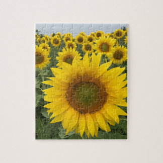 Colourful Floral Yellow Sunflowers Harvest Jigsaw Puzzle