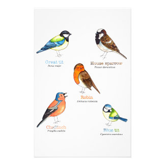 Colourful garden birds stationery design