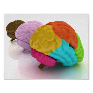 Colourful Human Brains Poster